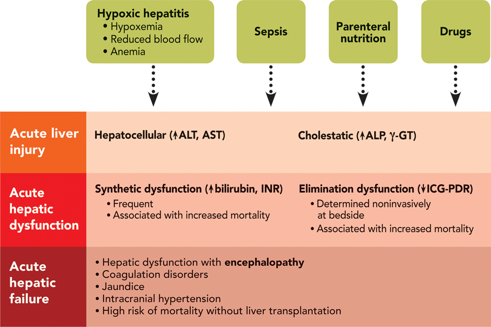 Factors affected in synthetic liver failure