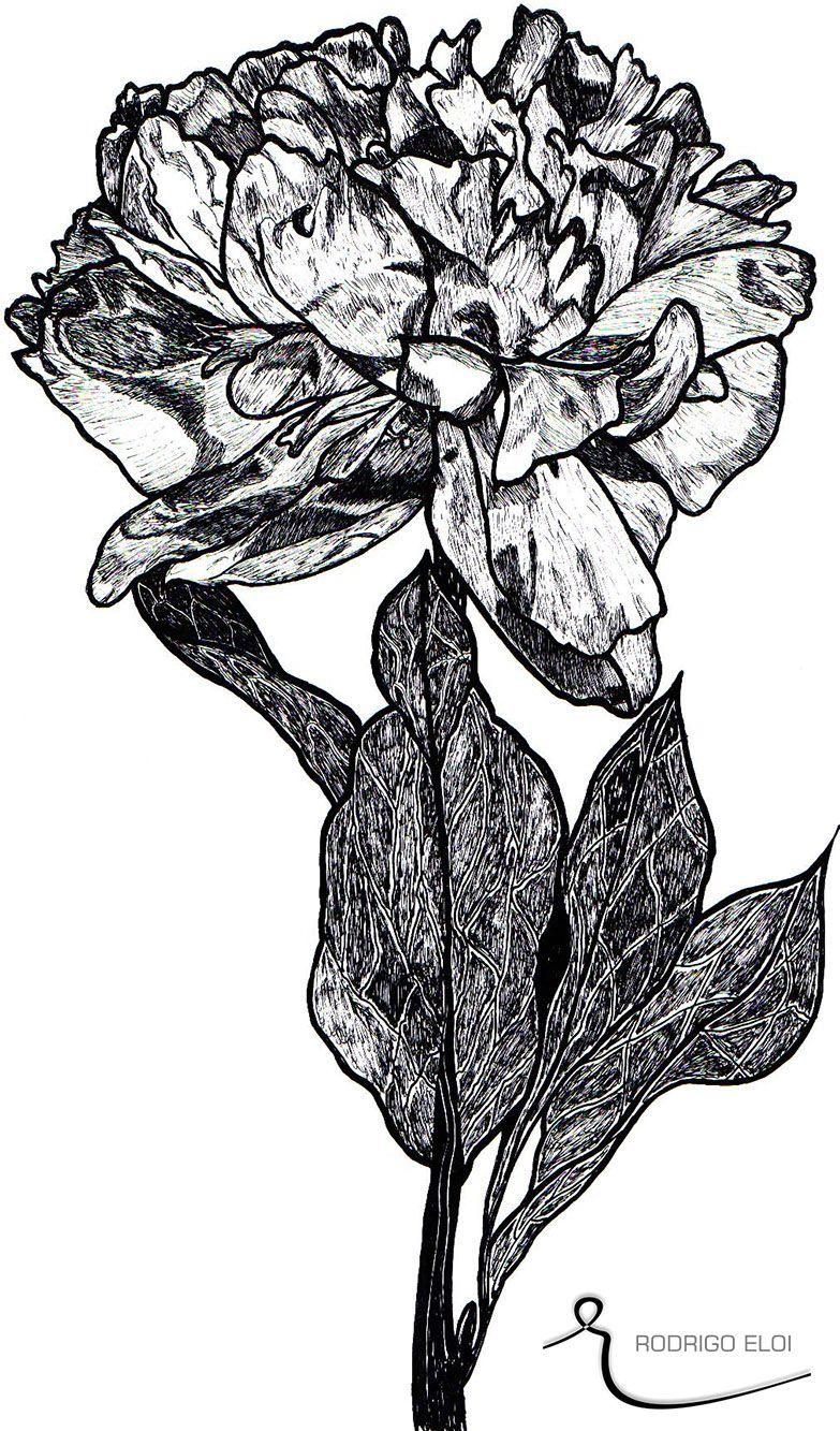 """A Rosa... Parte da Primeira mais bela obra do Criador """"a Natureza""""."""
