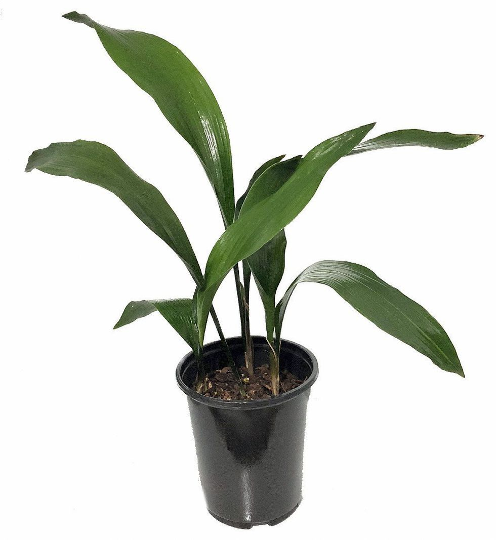 Nursery Indoor Plants Near Me: Low-Light Houseplants You Don't Need A Green Thumb To Keep