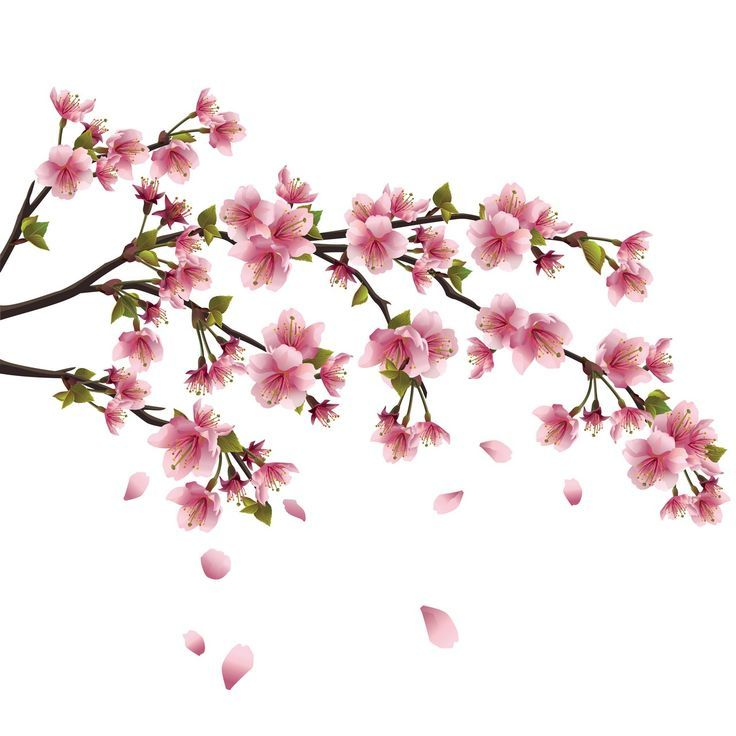 Flower Drawings Search Design Chinese Flowers Japanese Cherry Blossoms Cicek Papatyalar Resim