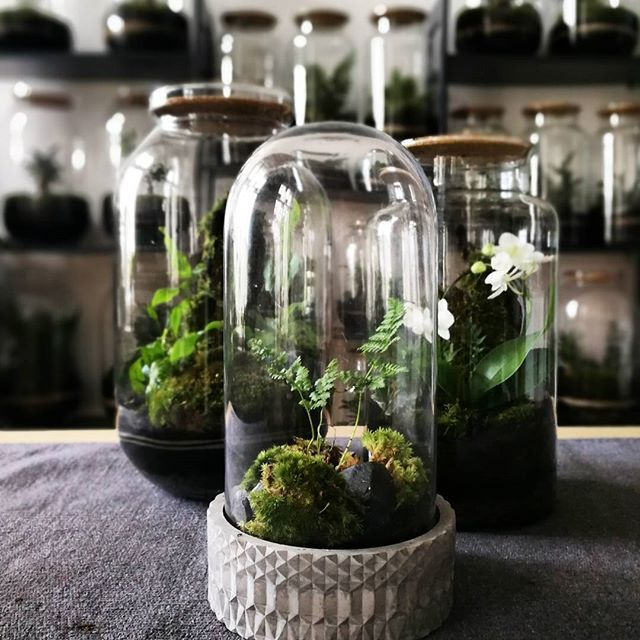 capsulegardens from berlin plantstyling jar dome orchid mossgarden mossarium. Black Bedroom Furniture Sets. Home Design Ideas