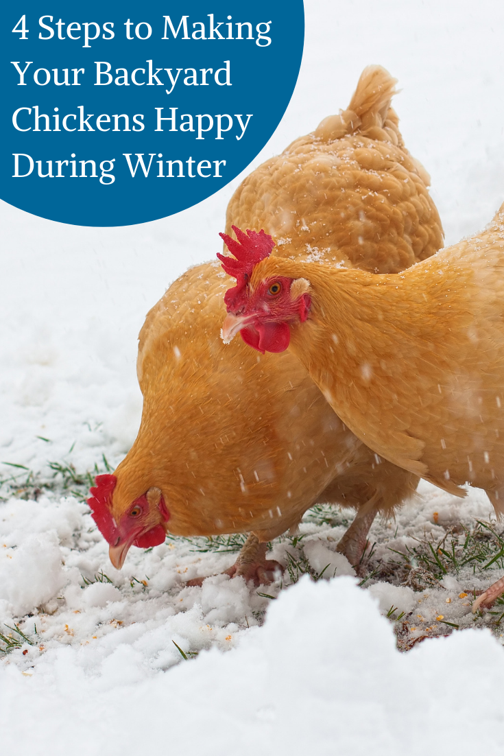 4 Steps to Making Your Backyard Chickens Happy During ...