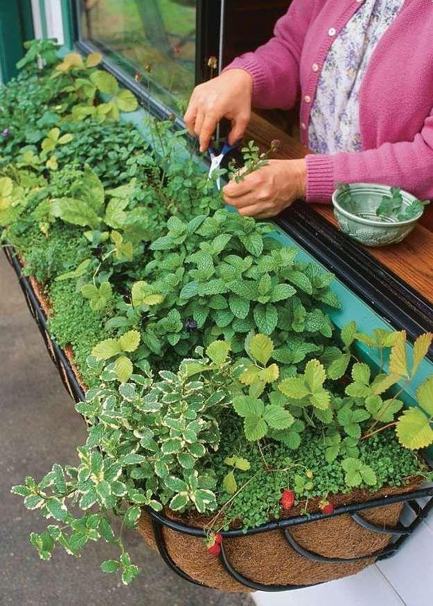 Den Garten individuell gestalten Kräutergarten anlegen Anleitung - gemusegarten anlegen pflanzplan