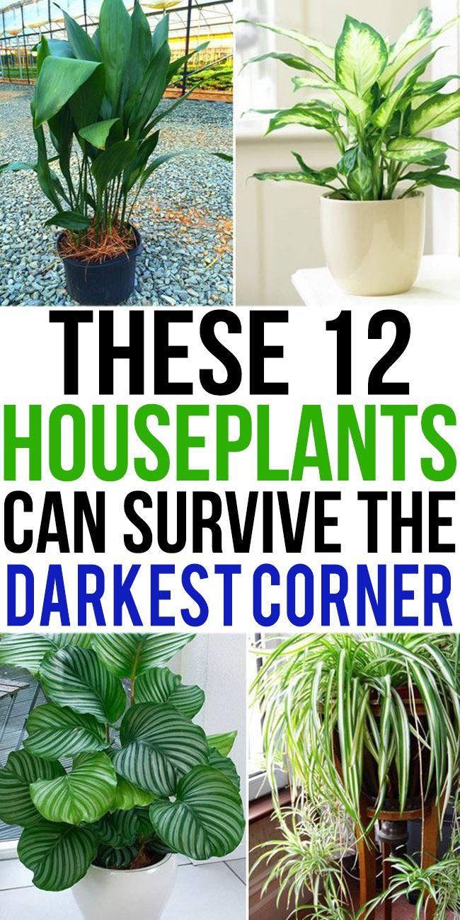 12 Houseplants That Can Survive Darkest Corner of Your House -   11 plants Room sunlight ideas