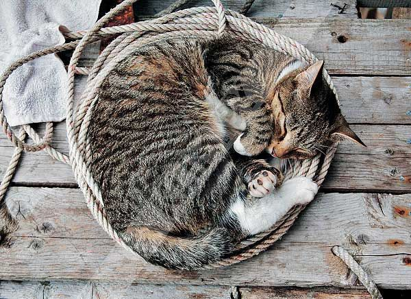 https://flic.kr/p/dWzL8w | Cat in Ropes | I WOULD LIKE TO HAVE THIS CARD