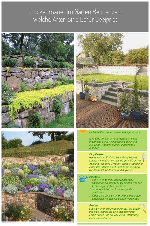 Wilder Garten Gartenbesucher Blog Www Montebarca Eli Pfaff In 2020 Garten Naturgarten Kiesgarten