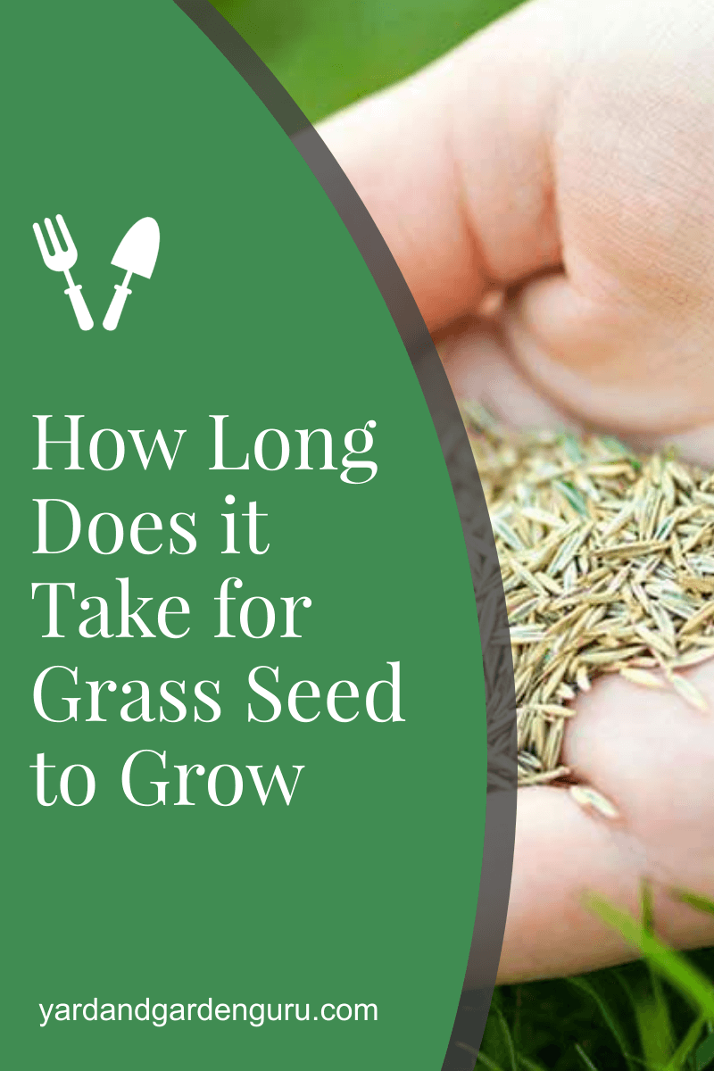 How Long Does It Take For Grass Seed To Grow In 2020 Grass Seed Planting Grass Growing Grass
