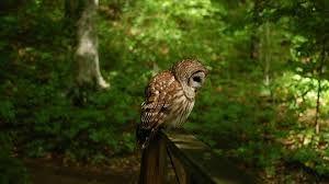 owls wallpaper - Recherche Google
