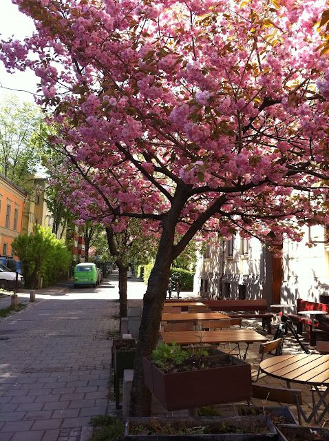 Pin By Anne Gjerden On Places Spaces I Love Norway Oslo Places