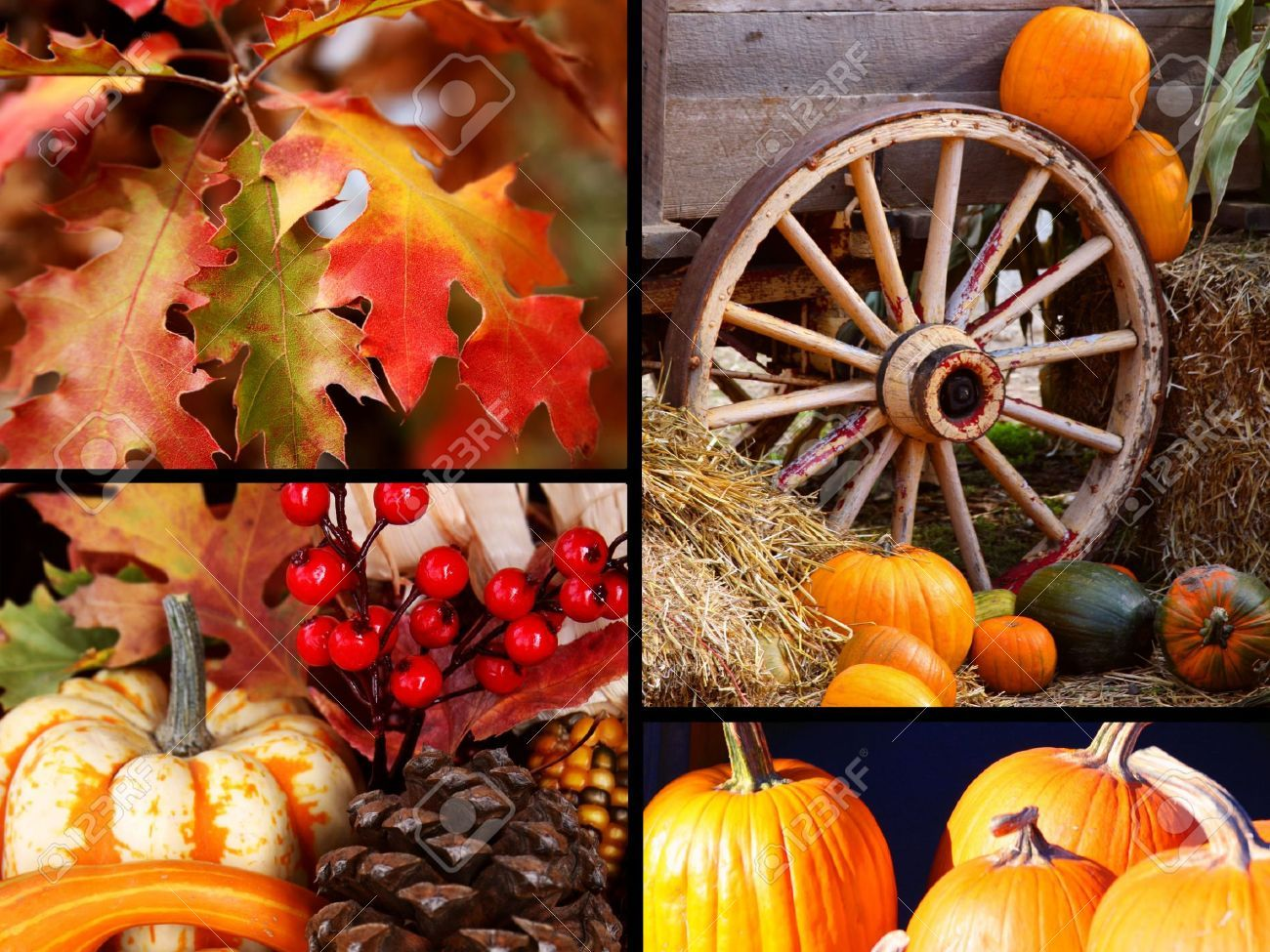 Colorful Thanksgiving Harvest And Fall Collection Stock Photo ...