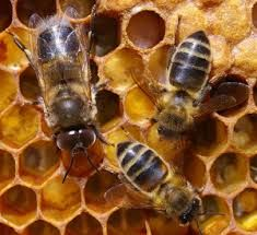 PINTEREST la miel y las abejas - Buscar con Google