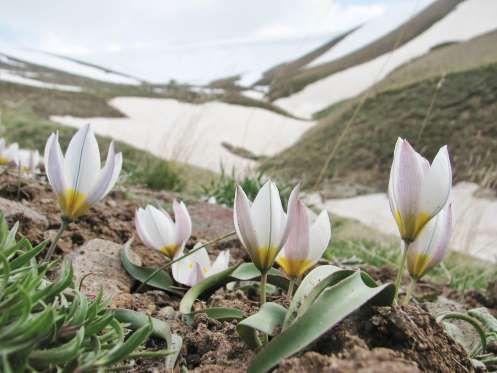 Spring fun facts - AP Photo/Marijn van den Brink