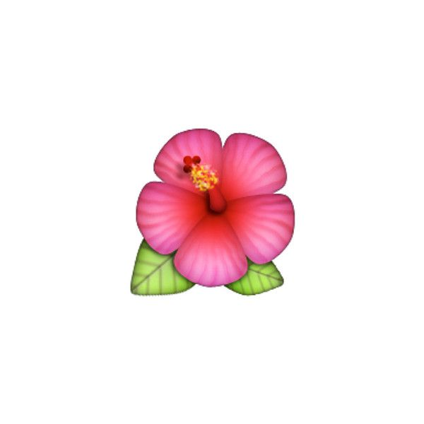 Hibiscus Liked On Polyvore Featuring Intimates Characteres