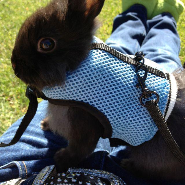 Bunny rabbit harness | Animals | Pinterest | Bunny rabbit, Bunny and