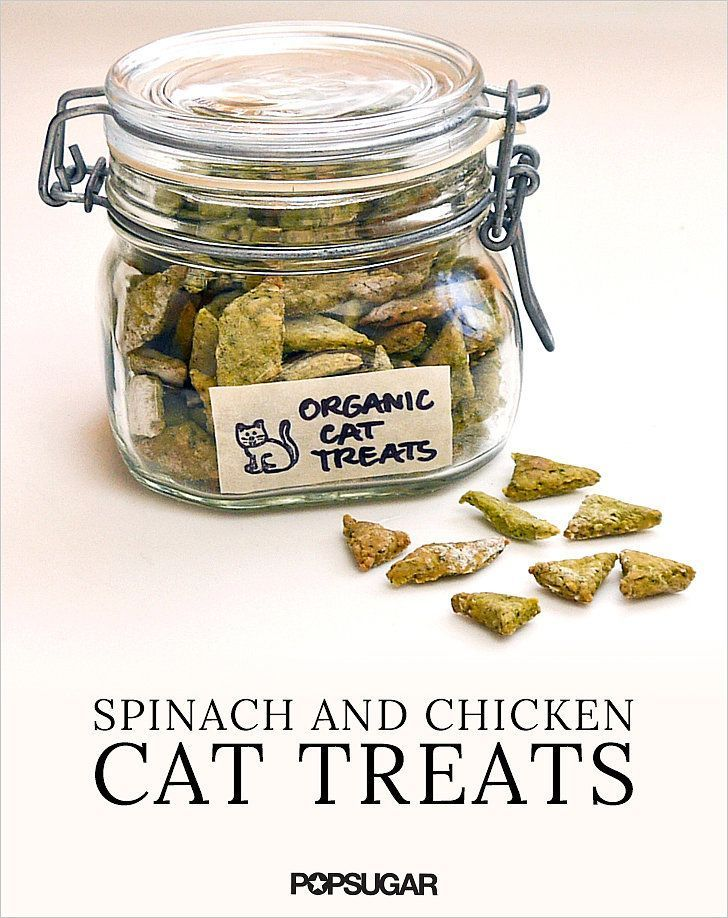 Homemade organic spinach and chicken cat treats recipe cat homemade organic spinach and chicken cat treats forumfinder Choice Image
