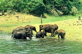 Idukki District of Kerala - An official website