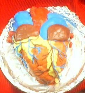Anatomically correct human heart