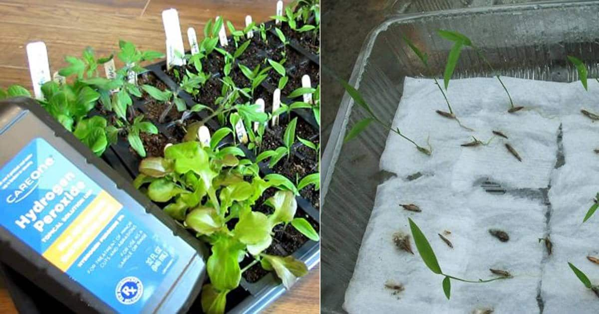 This One Secret Can Make Your Seeds Germination Successful