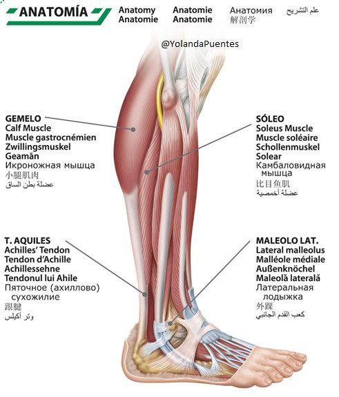7) Twitter   #Medicina #Deporte - #Traumatología - #Reumatología ...