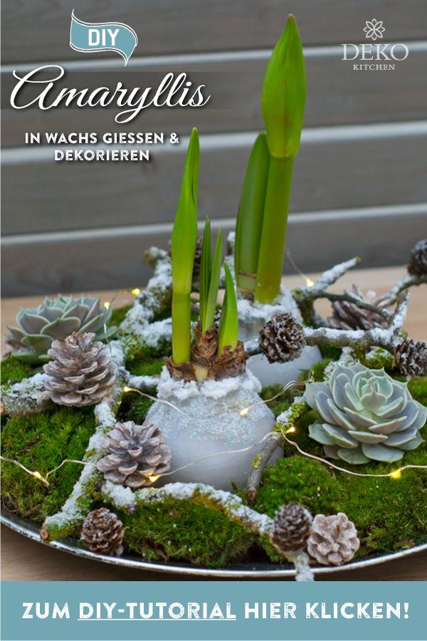 DIY-Weihnachtsdeko: Amaryllis in Wachs gießen und wunderschön dekorieren