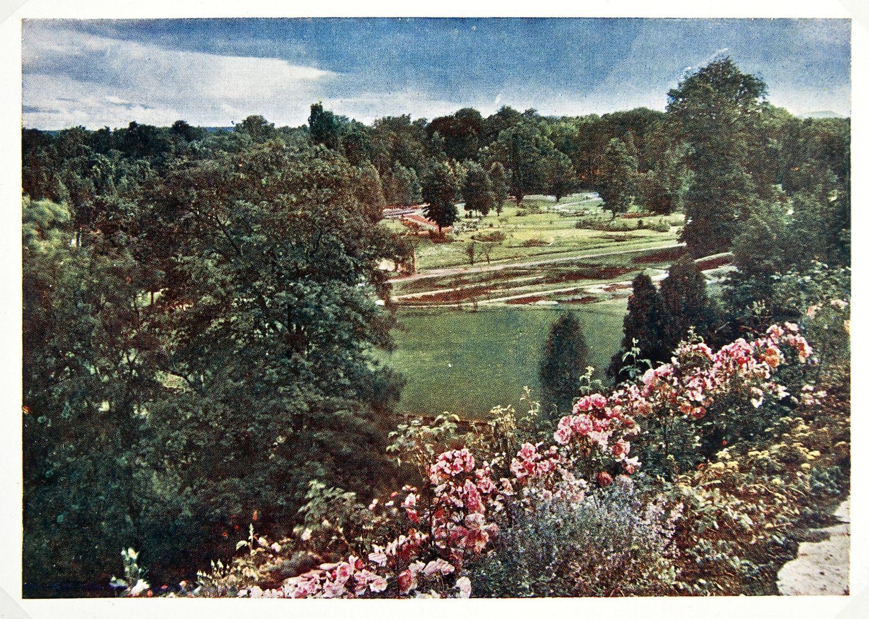Bildergebnis für rosen am hang Garten Pinterest