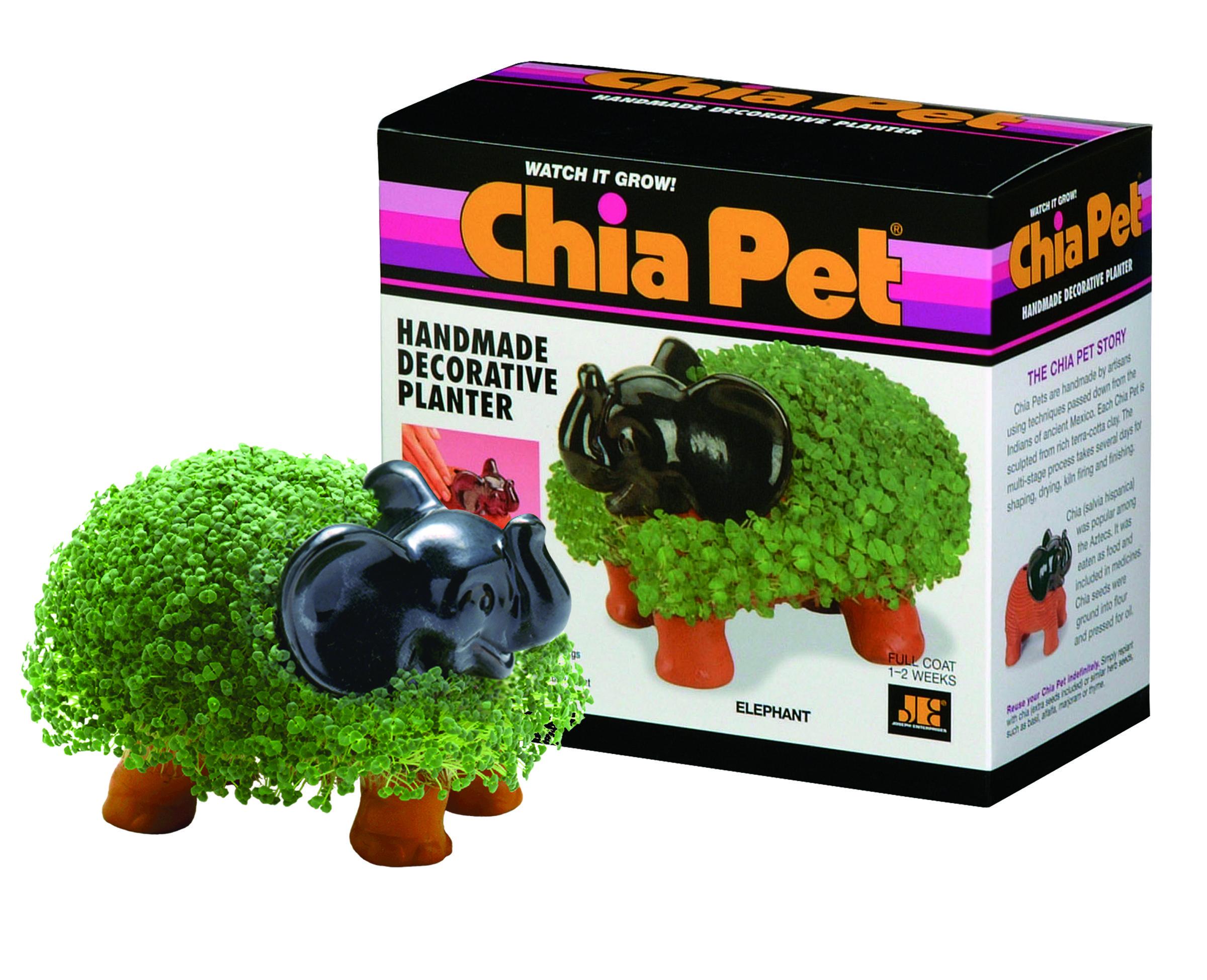 Chia Elephant Chia Pet Pet Kitten Influenster
