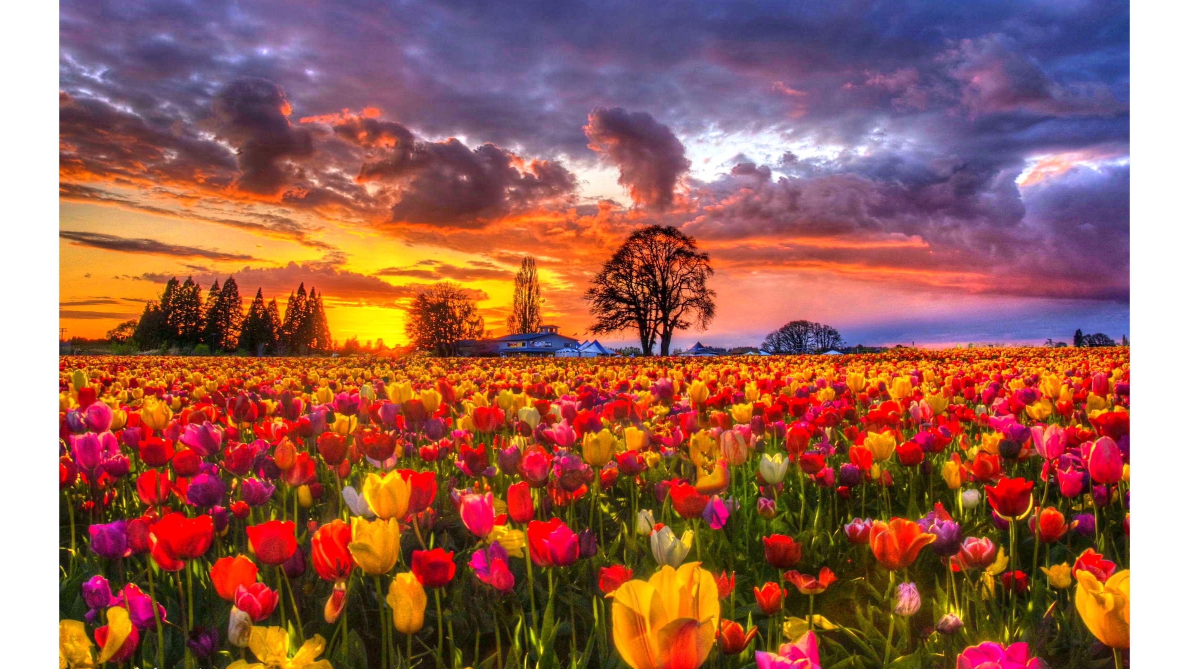 Spring Flowers Tulips Field Sunrise Grass Clouds: Pin De Javier Magdaleno En Paisajes