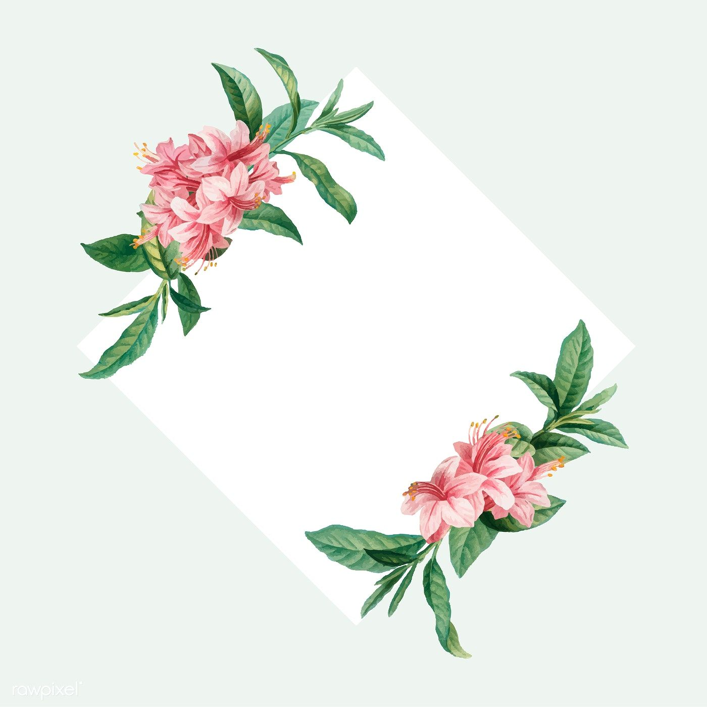 Vintage Azalea Rosea On A Frame Vector Free Image By Rawpixel Com Vector Free Azaleas Rose Gold Backgrounds