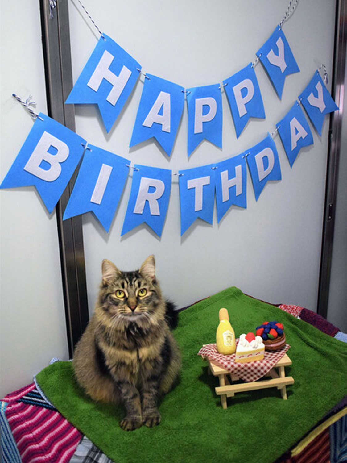 Shelter Cat Still Looking For Forever Home After No One Shows Up To Her Birthday Party In 2020 Cat Shelter Battersea Dogs