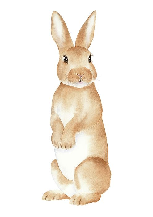 Rabbit Rabbit Watercolor Woodland Nursery Rabbit Wall