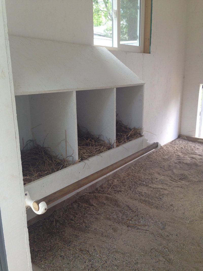Our newly installed chicken nesting box in the chicken for Shop einrichtung gebraucht