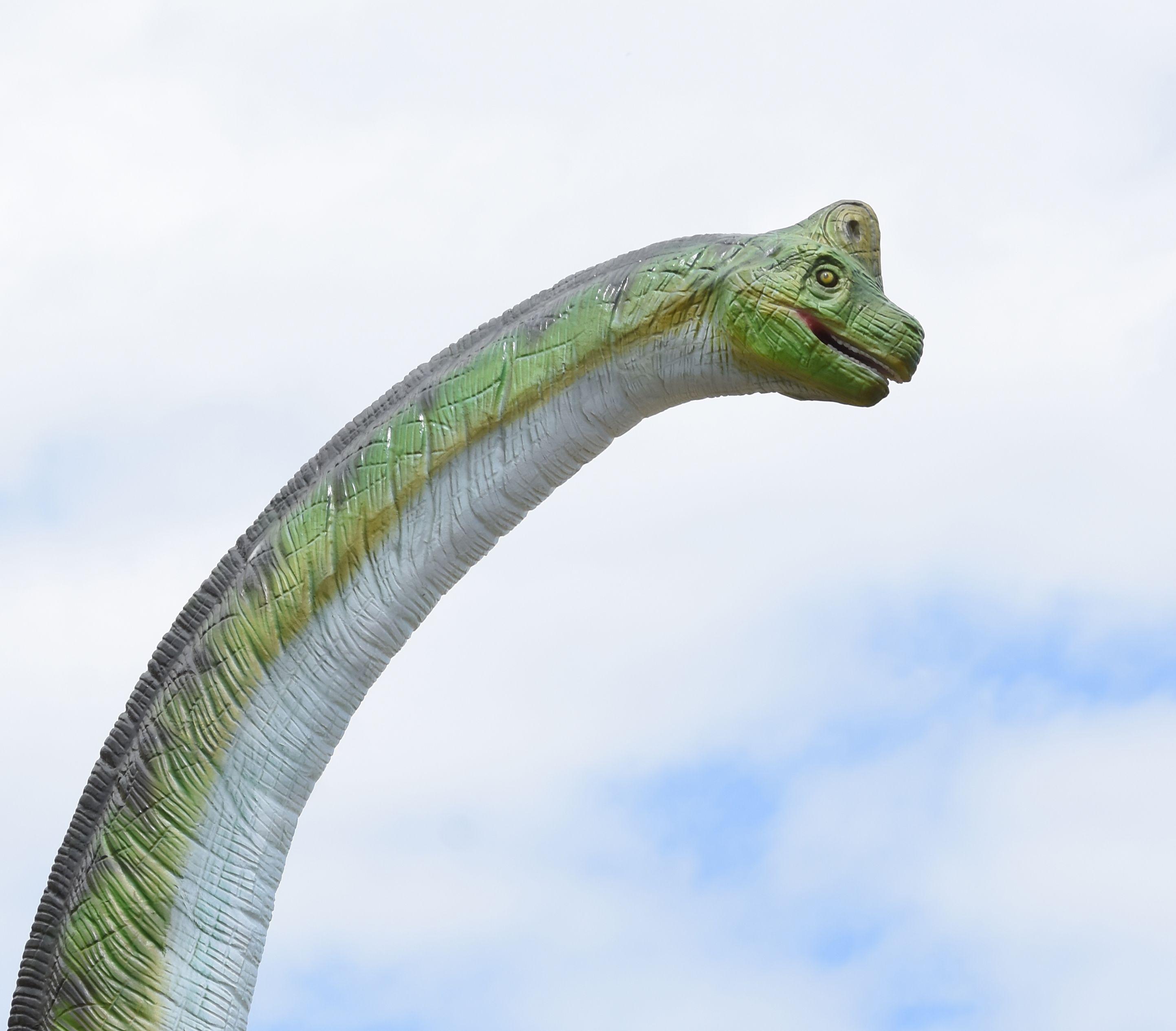 image relating to Mystic Aquarium Printable Coupons named Brachiosaurus brain Juric Giants Mystic aquarium