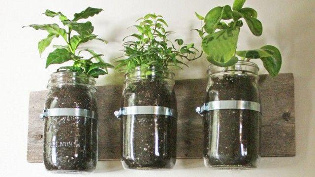 repurpose mason jars into wall planters for herbs!