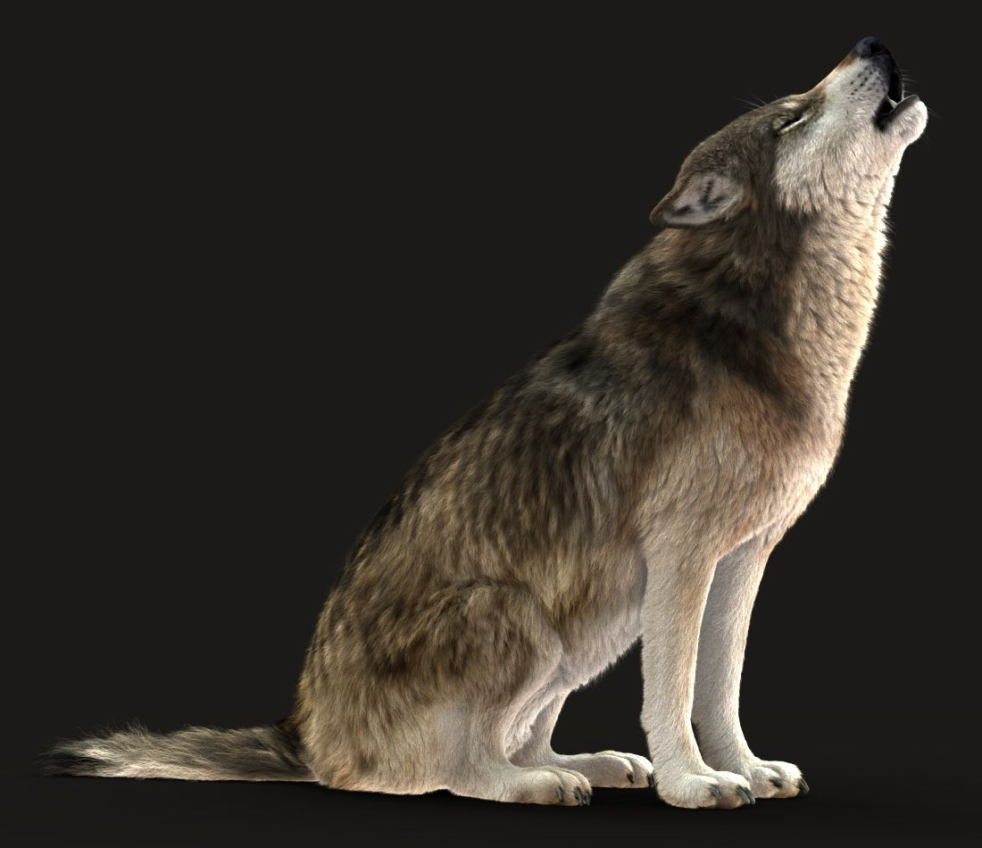 Pin On Art Best of pictures of gray wolves howling