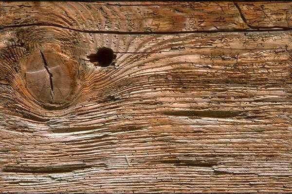 49++ Que es madera rh ideas in 2021