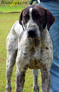 Pin On Hunting Dogs