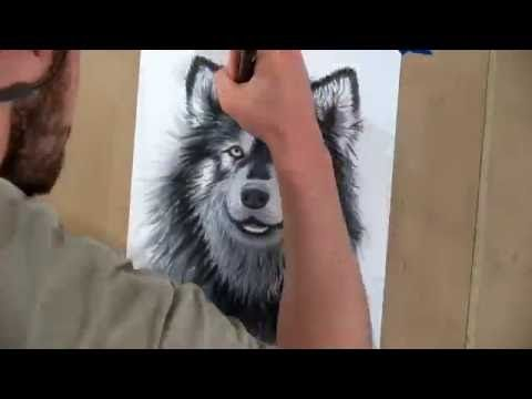 Drawing an Alaskan Mal - Time Lapse
