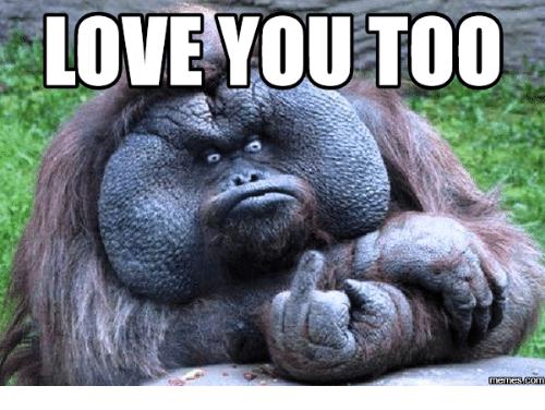 Love You Too Memes Funny Pics Monkeys Funny Love You Meme Work Memes