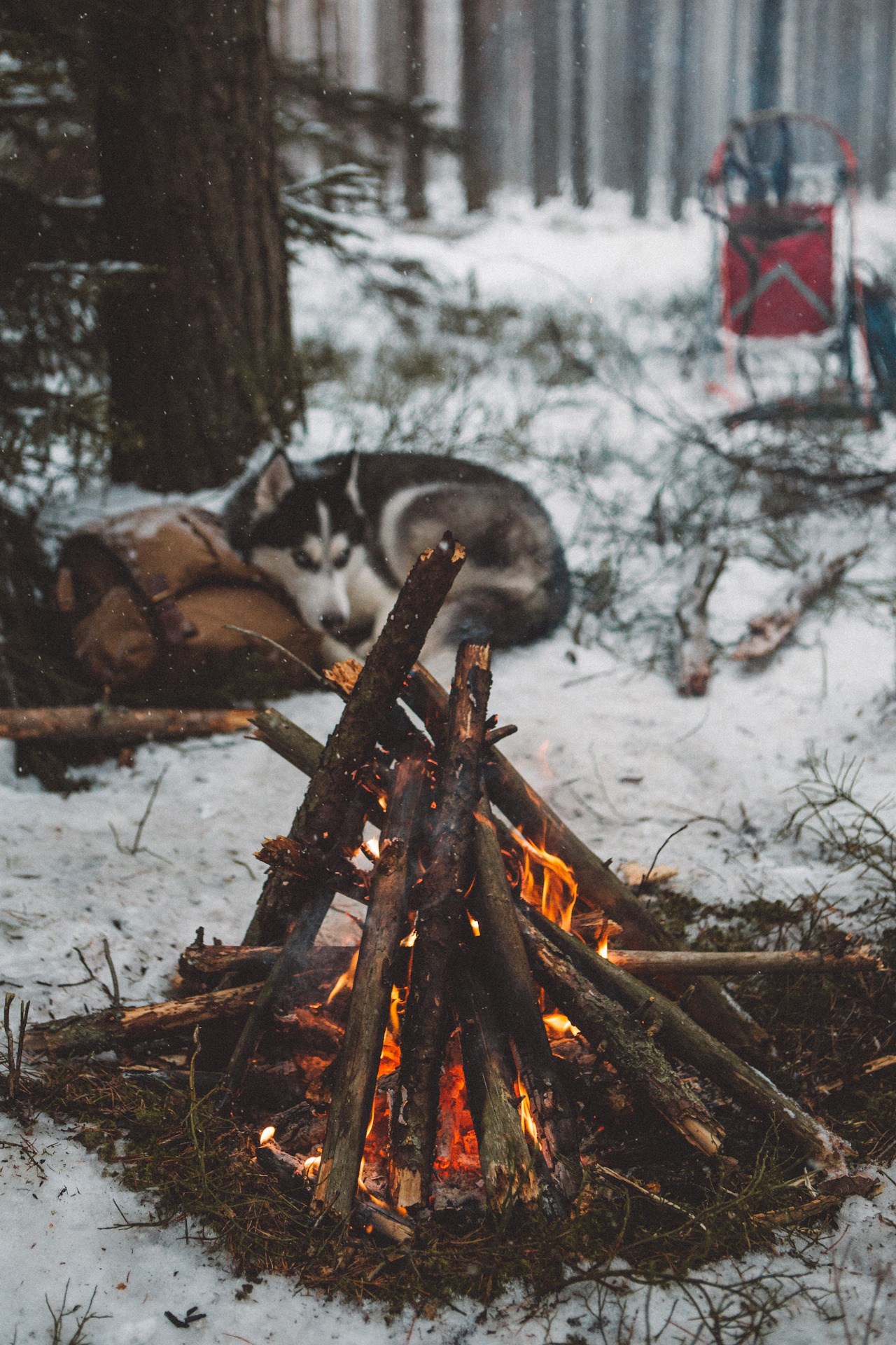 campfire, dog, winter, husky, snow in 2020 (With images ...