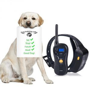 dog training collars review