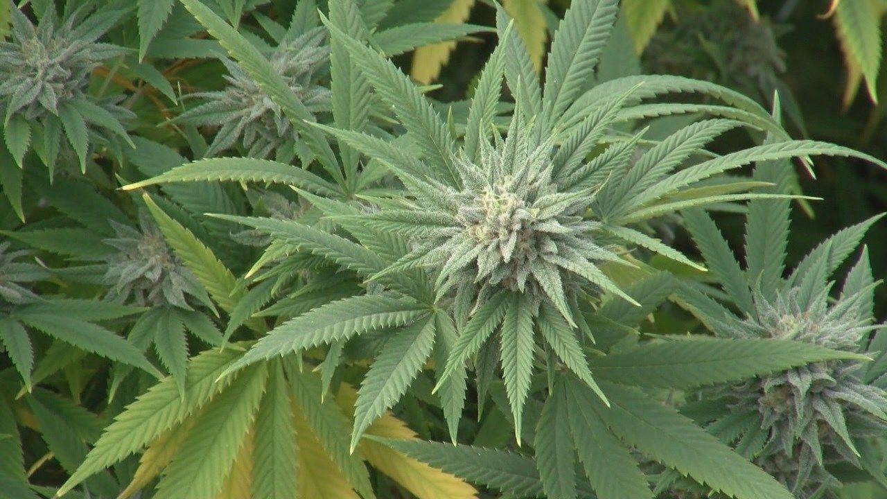 Doctor opens medical marijuana certification practice kait doctor opens medical marijuana certification practice kait 1betcityfo Gallery