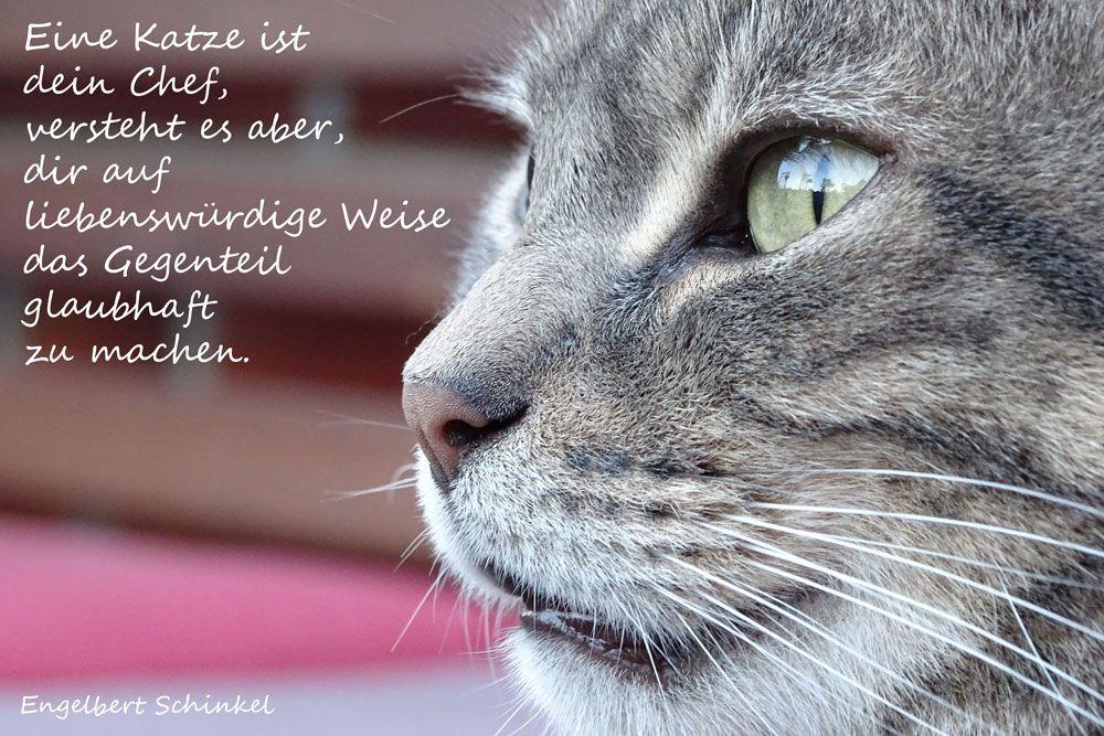 Eine Katze Ist Dein Chef Versteht Es Aber Dir Auf Liebenswurdige Weise Das Gegenteil Glaubhaft Zu Machen Engelbert Schinkel Katzenzitate Katzenweisheiten