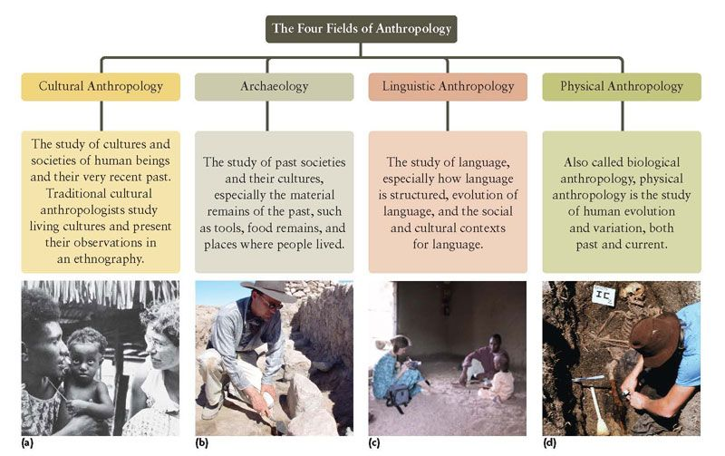 what kind of science is anthropology