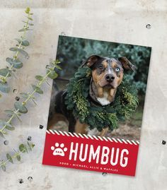 have yourself a furry little christmas find the perfect pet holiday card with - Pet Holiday Cards