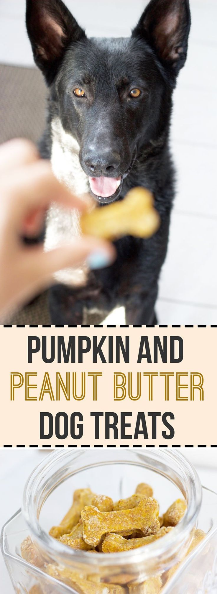 will pumpkin settle a dog's stomach