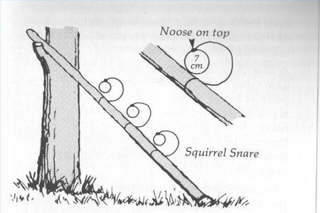 Trapping for Food squirrel Snare | Traps & snares | Pinterest ...