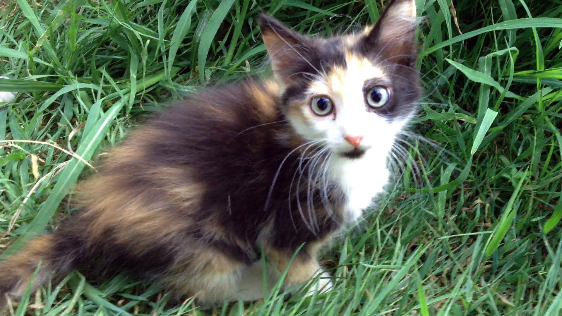 Kittens Outside Google Search Kittens Cutest Fluffy Cat Kitten Names