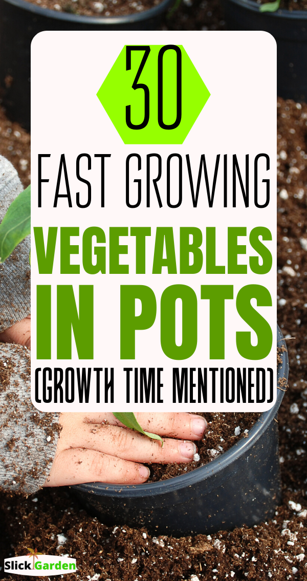 30 Fast Growing Vegetables In Pots Growth Time Mentioned 400 x 300