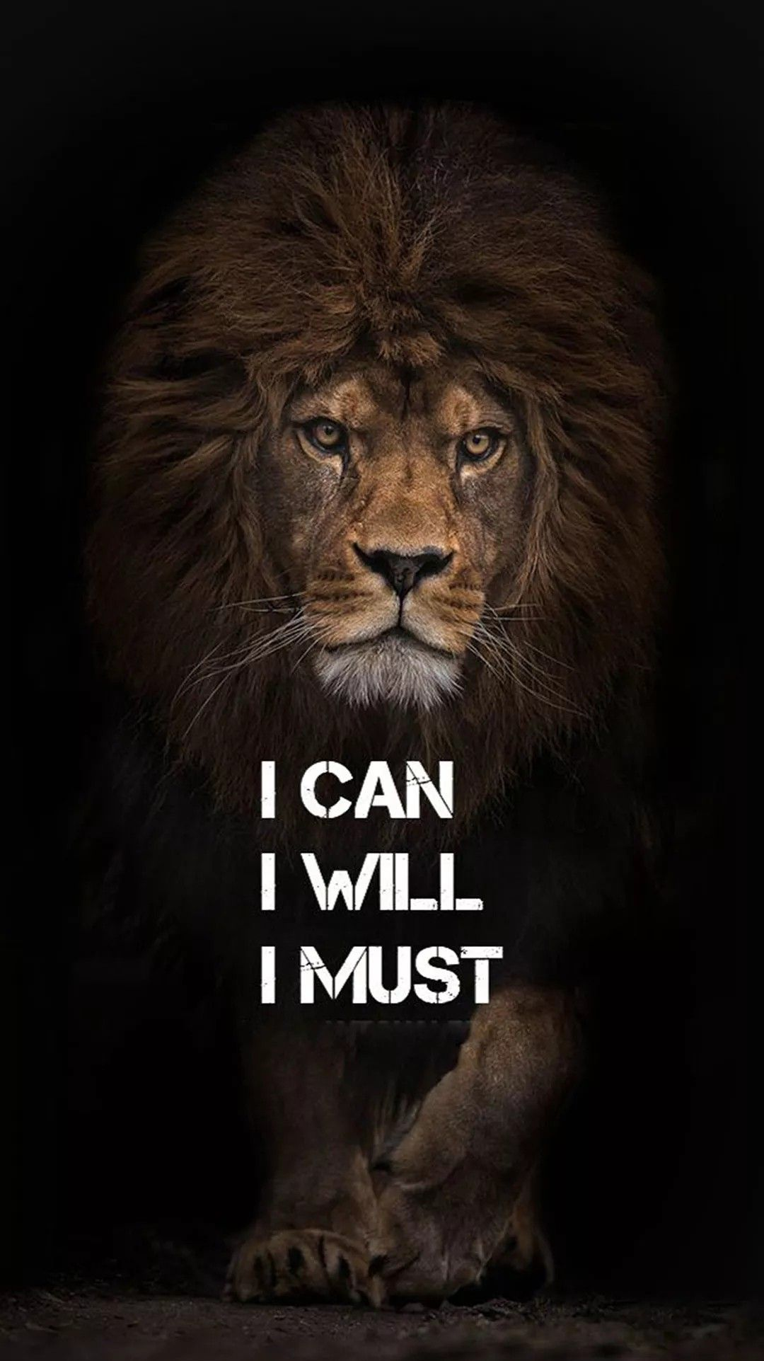 5k Ultra HD Lion wallpapers, Quote wallpapers , Black wallpapers