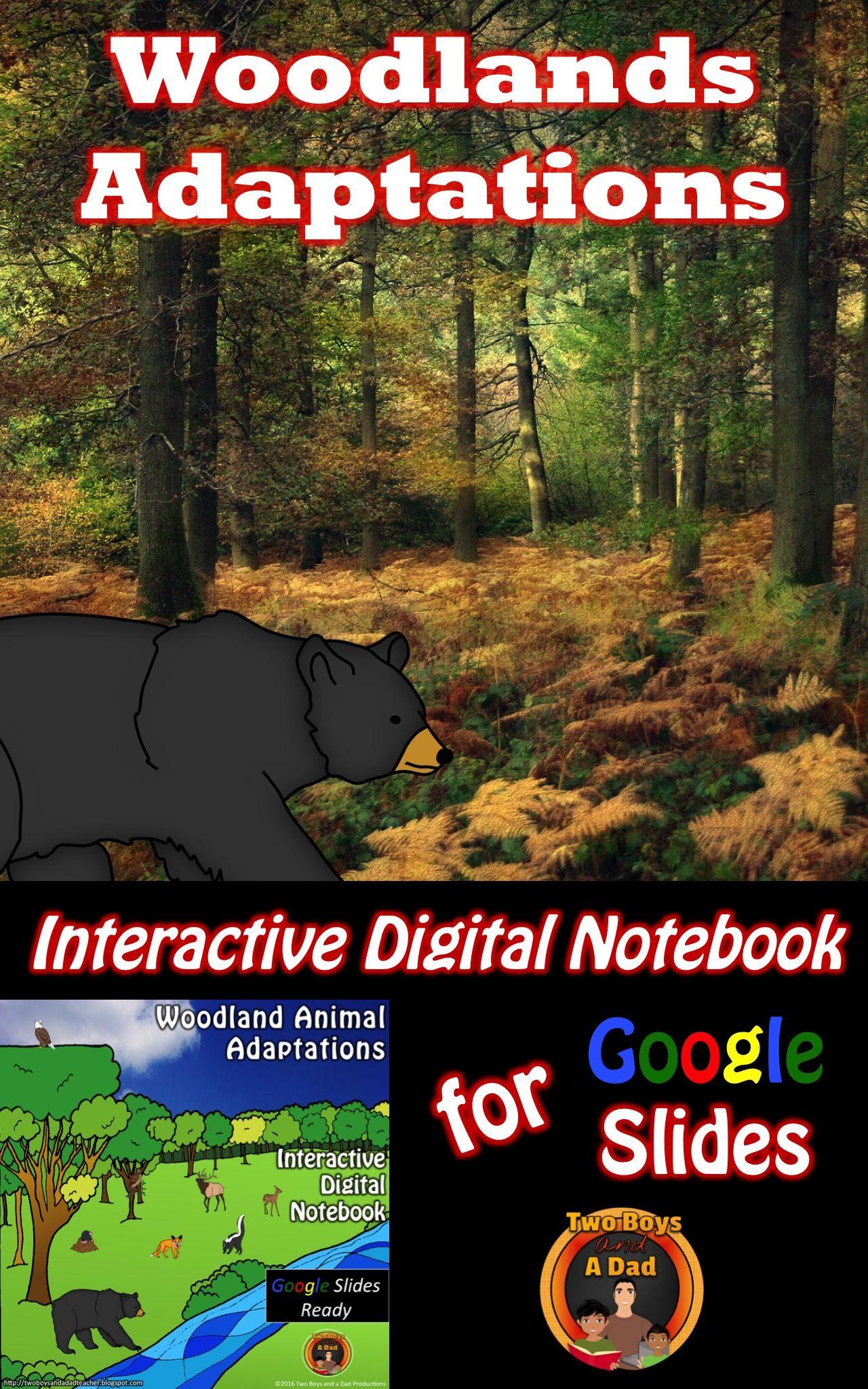 Woodland Animal Adaptations Interactive Digital Notebook